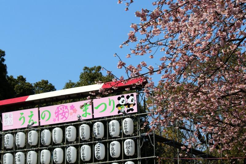 上野公園の早咲き桜_a0127090_1640396.jpg