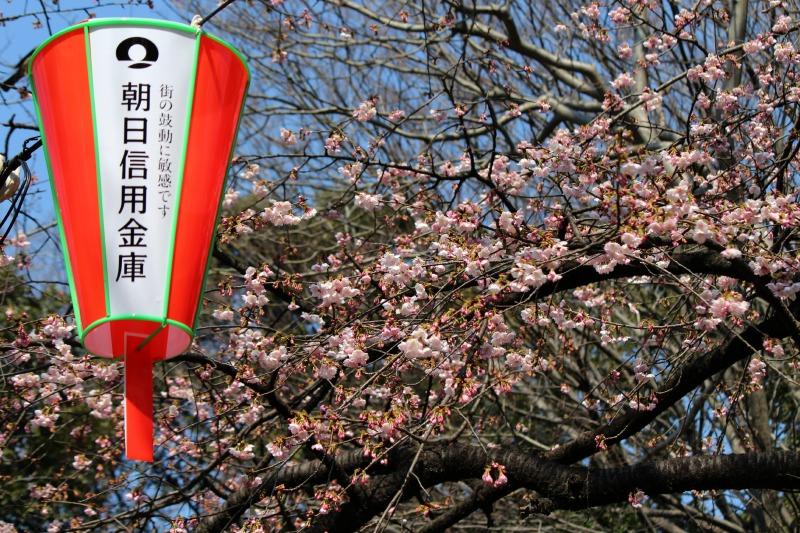 上野公園の早咲き桜_a0127090_16414135.jpg