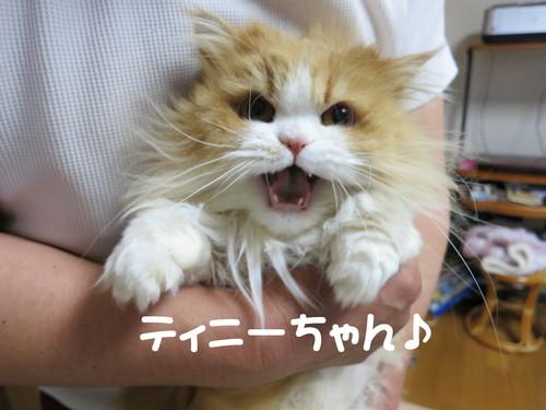 富山ブラック!食ったったwww_b0200291_21335788.jpg