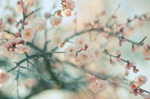 桜の下でお花見日和_a0283796_1342844.jpg