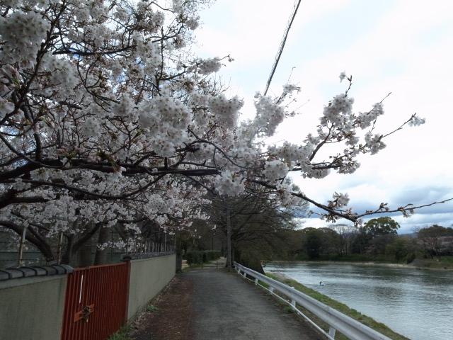 散歩@岡山市内_f0197703_11154346.jpg