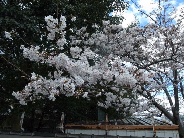 散歩@岡山市内_f0197703_11172841.jpg