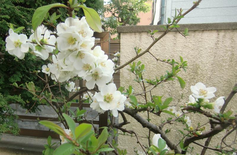 3月30日(日)  今日も雨・・・・・・_d0278912_012490.jpg