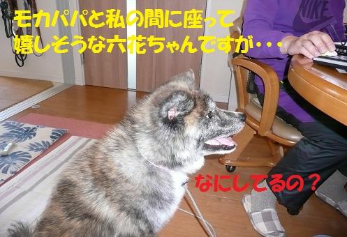 f0121712_15342145.jpg