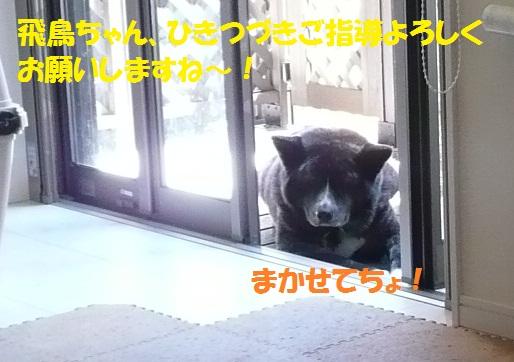 f0121712_15343549.jpg