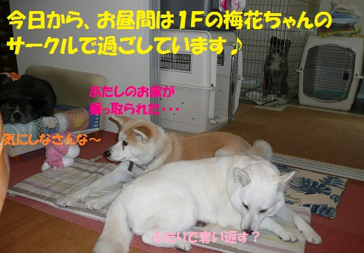 f0121712_7175663.jpg