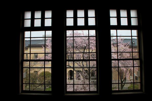 2014花めぐり10 京都府庁_e0048413_2153382.jpg