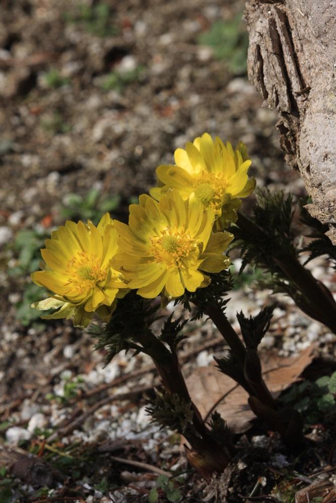 春を味わう_c0111229_17543466.jpg