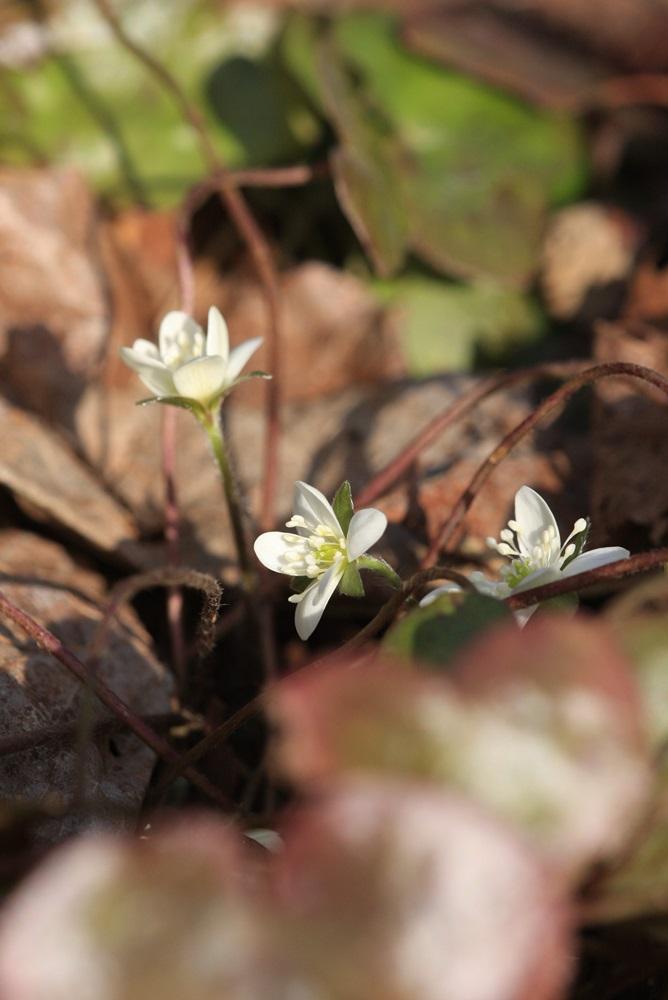 春を味わう_c0111229_17544396.jpg