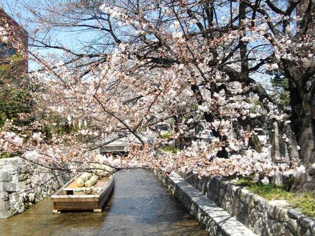 桜が咲いたら、水出しアイス珈琲はじめます。_e0230141_14195385.jpg