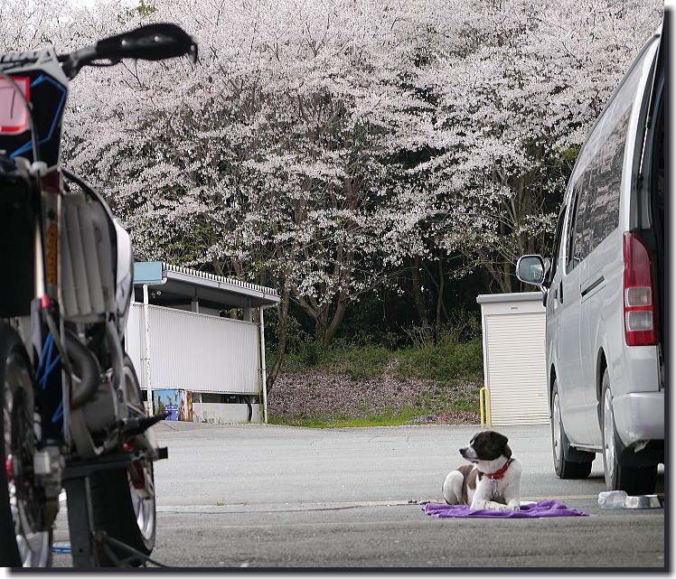 桜舞うモタードスクール_f0178858_20421159.jpg
