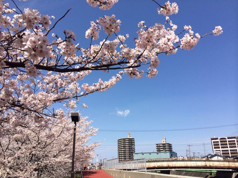 桜🌸3_e0233674_17485821.jpg