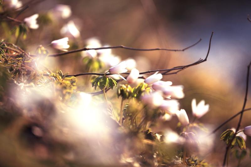 春の進み具合_f0075075_16445413.jpg
