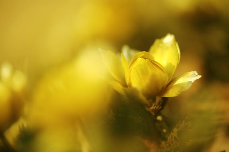 春の進み具合_f0075075_1645262.jpg