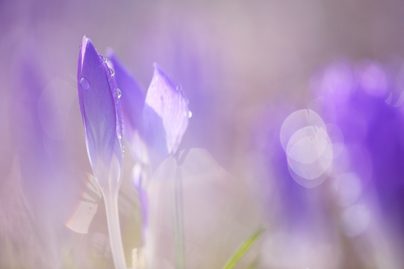 春の進み具合_f0075075_16453651.jpg