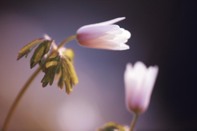 春の進み具合_f0075075_1645475.jpg