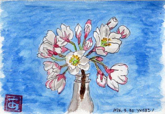 桜が満開_e0232277_11425993.jpg