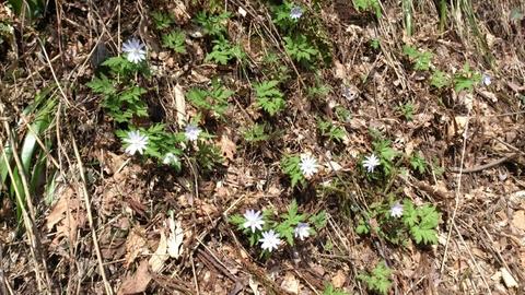 春一番の野の花_d0182179_19141322.jpg