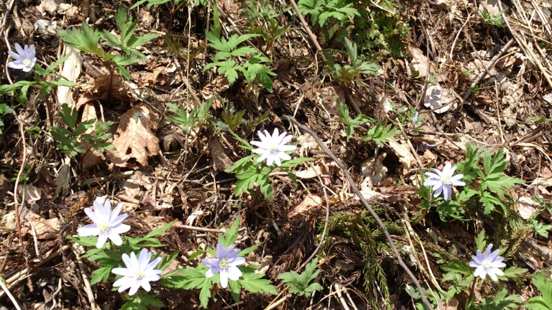 春一番の野の花_d0182179_1915075.jpg