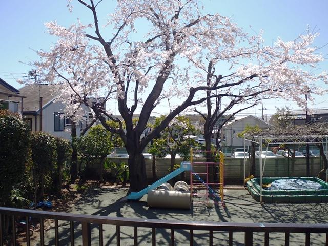 桜満開です!_c0186983_1052247.jpg
