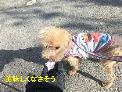 一発芸再び_e0222588_1675244.jpg