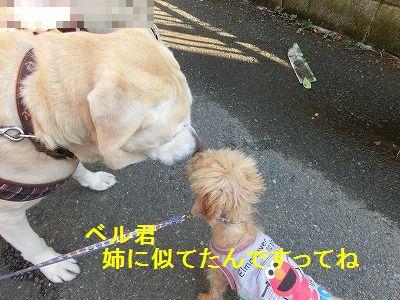 一発芸再び_e0222588_168370.jpg