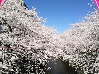 今日の目黒川 (3/31)_f0230689_12574134.jpg