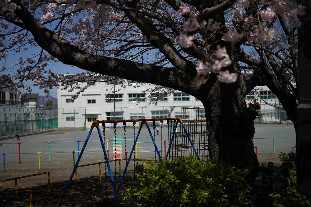 桜の季節…  その1_e0139093_19381638.jpg
