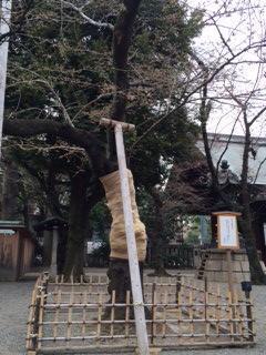 2014年の桜(1)_b0129897_1024685.jpg