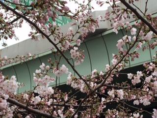 2014年の桜(2)_b0129897_10305981.jpg