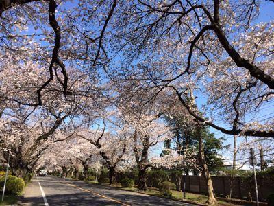 桜 満開ホ~ホケキョ!_d0260803_20244626.jpg