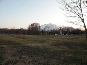 4/1 芝が顔を出した。_b0174425_1861139.jpg