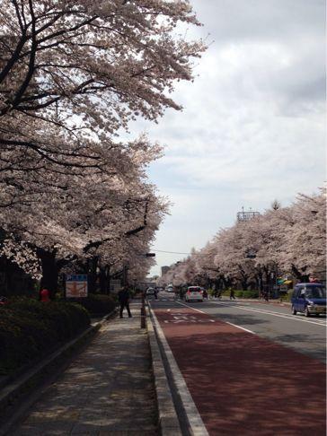 国立の桜🌸_b0203925_20355286.jpg