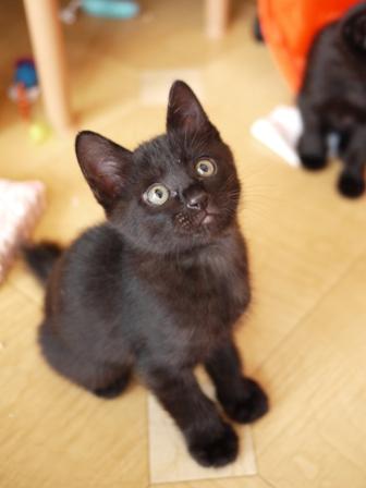 はじめてのお誕生日猫 ぎゃぉす1歳編。_a0143140_23554897.jpg