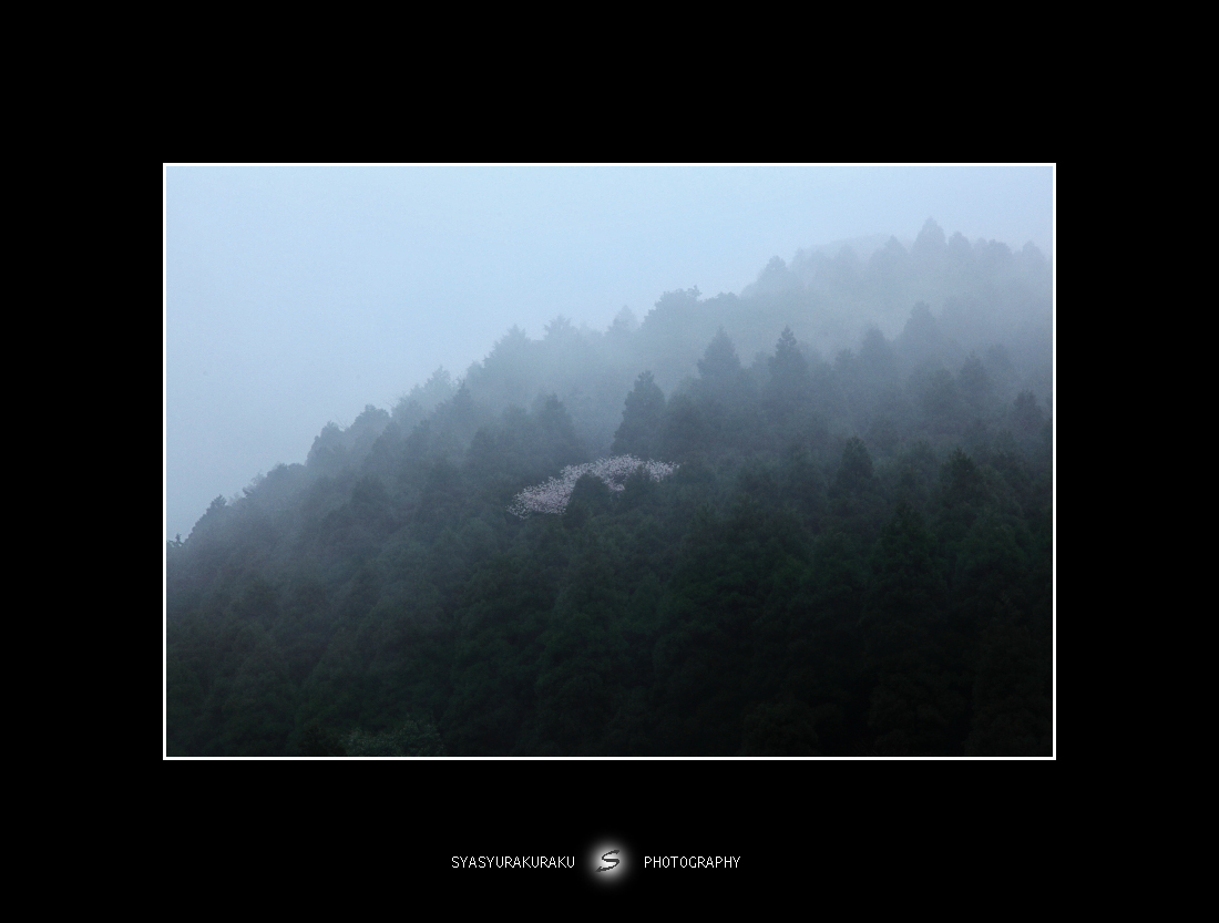朝靄に咲く_c0253556_5301015.jpg