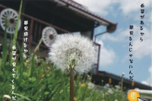 たんぽぽ_b0129362_2110392.jpg