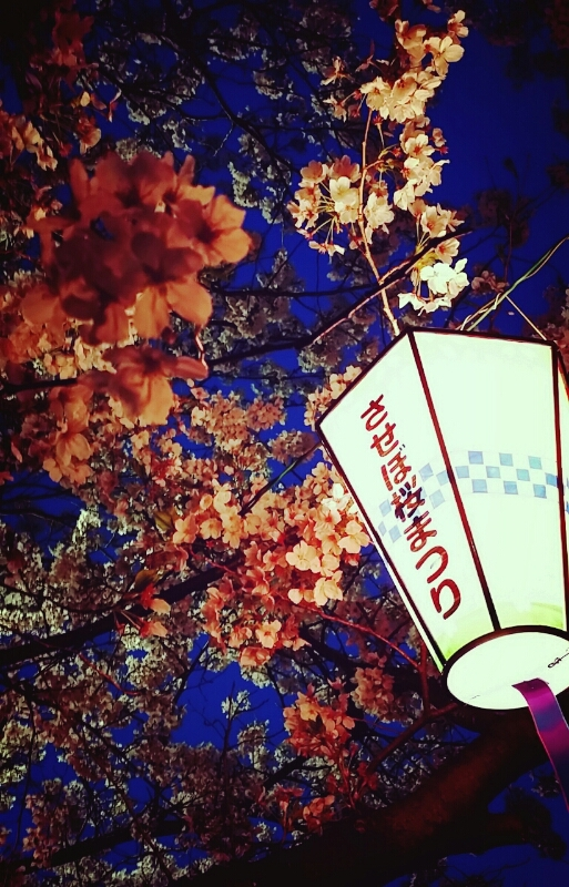桜の季節_c0204262_1145502.jpg