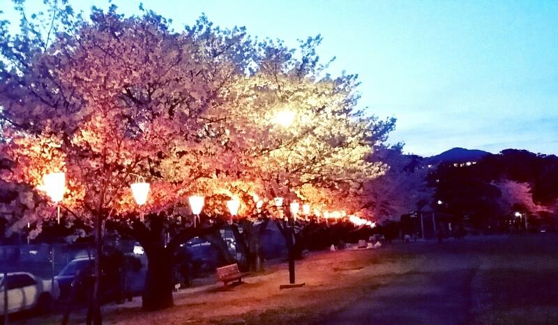 桜の季節_c0204262_11461470.jpg