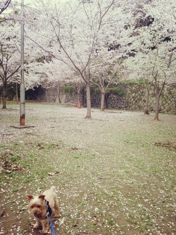 桜の季節_c0204262_11523423.jpg