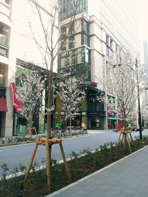 桜咲く♪_a0289864_16161022.jpg