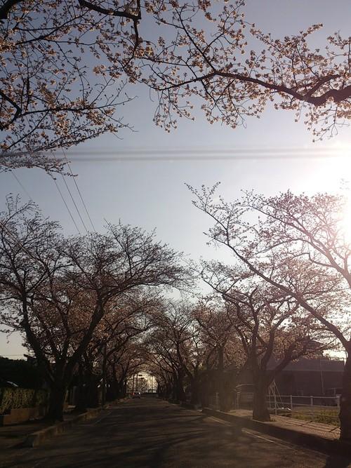 新しい風が吹く日_f0230767_17113822.jpg