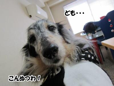 d0020869_11412580.jpg