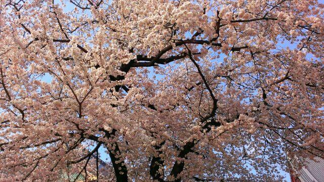 春爛漫_e0172872_2330515.jpg