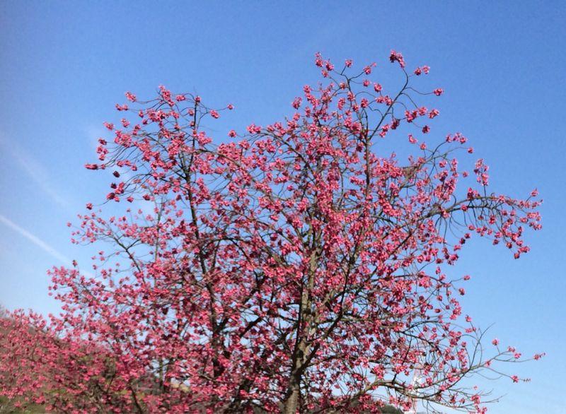 桜🌸4_e0233674_18224968.jpg
