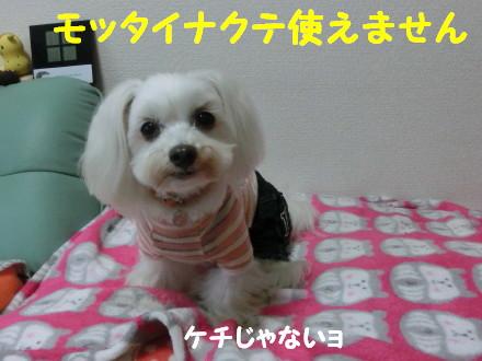b0193480_2050762.jpg