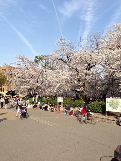 Cherry Blossoms_c0198582_18303339.jpg