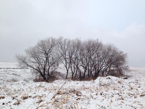 4月1日(火) 冬の樹_c0146191_22534093.jpg