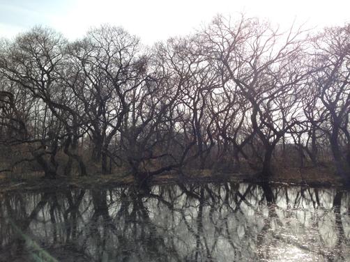 4月1日(火) 冬の樹_c0146191_22534620.jpg