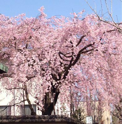 春♪_f0028791_9273931.jpg