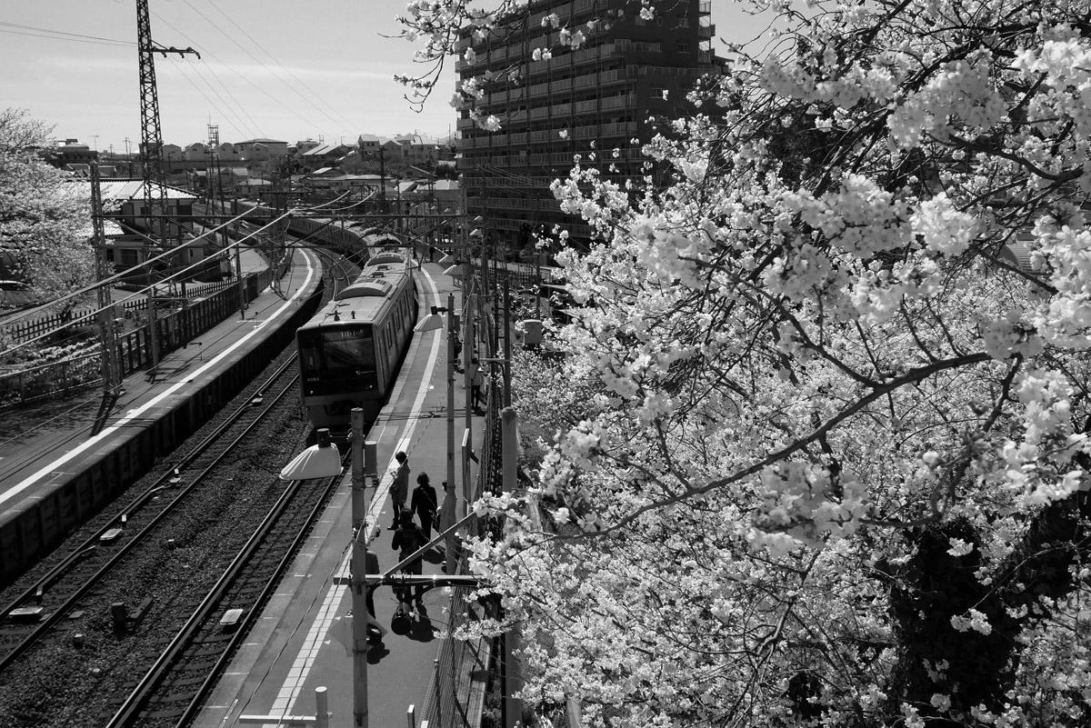 桜の季節…2_e0139093_10294570.jpg